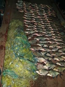 Поблизу села Леськи Черкаського району виявлено безгосподарські сітки та 76 кг риби