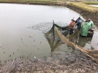 У Кременчуцьке  водосховище вселено понад 2 тонни риби, - Черкаський рибоохоронний патруль